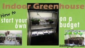How to Start an Indoor Greenhouse on a Budget