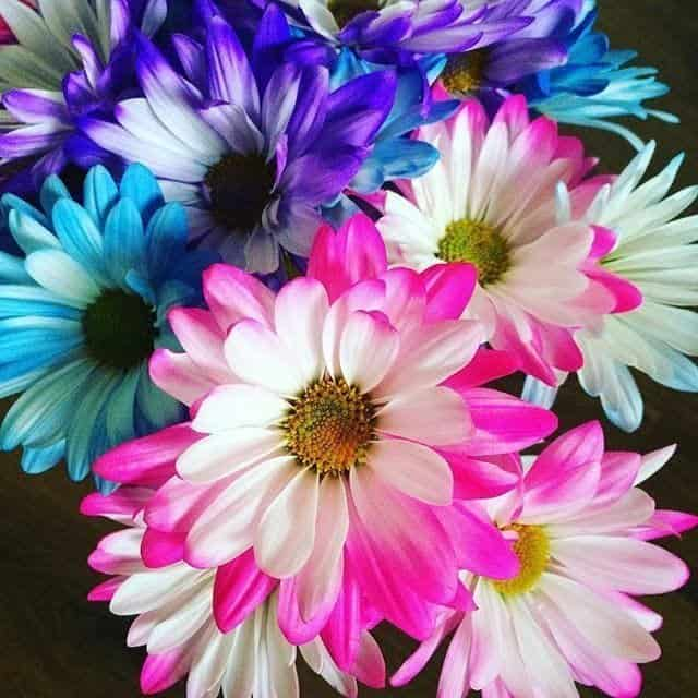flowers-for-pail-awareness-month