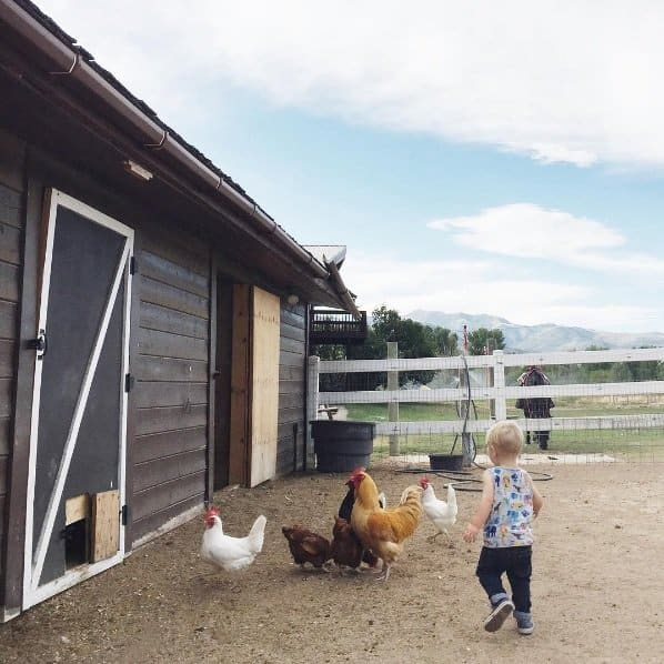 penny-ranch-chickens