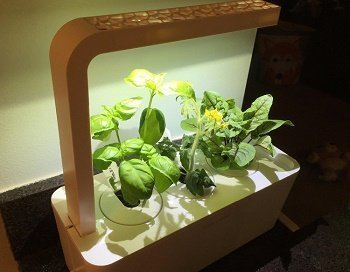 5 Best Budget Indoor Hydroponics Kits for Growing Your Home Herb ...