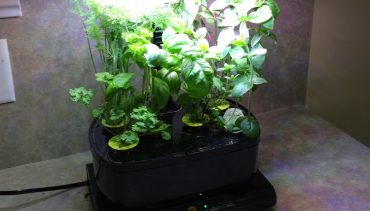 5 Good Indoor Hydroponics Kits for Growing Your Home Herb Garden
