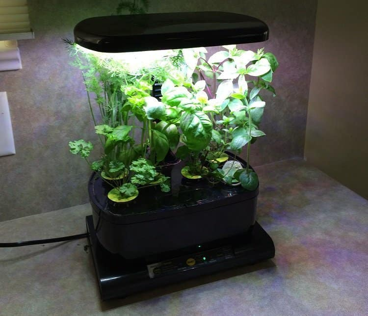 5 Good Indoor Hydroponic Kits for Growing Your Home Herb ...