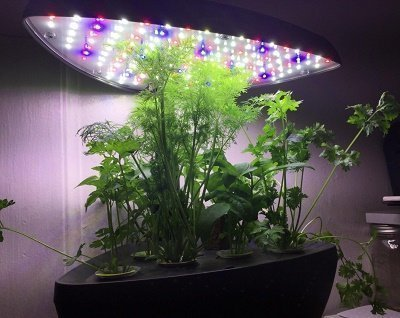 Miracle Grow Classic Indoor Herb Garden Grow System