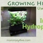 5 Good Indoor Hydroponics Kits for Growing Your Home Herb Garden